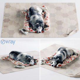 Husky Dog 3dsmax 3dmodel Animal