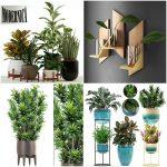 Sell Plant set 2019 3dbrute