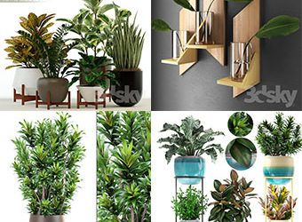 Sell Plant set 2019 340x340 3dbrute