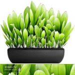 Palm Grass 88
