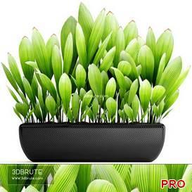 Palm Grass 88 3d model Download 3dbrute