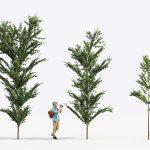 tree for architectural 3d model MT-PM-V14-07