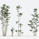 tree for architectural 3d model MT-PM-V14-15