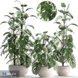 Plant collection Monstera