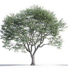 tree-3d-model-5-03-02
