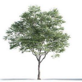 tree-3d-model-5-05-01
