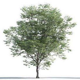 tree-3d-model-5-05-02