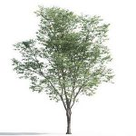 tree-3d-model-5-05-03