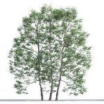 tree-3d-model-5-07-01