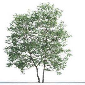 tree-3d-model-5-07-02