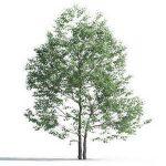 tree-3d-model-5-07-03