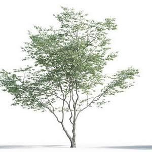 tree-3d-model-5-09-01