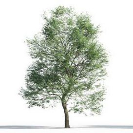 tree-3d-model-5-10-02