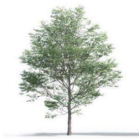 tree-3d-model-5-11-01