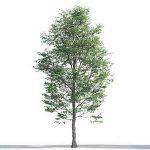 tree-3d-model-5-11-02