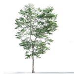 tree-3d-model-5-12-01