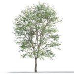 tree-3d-model-5-14-01