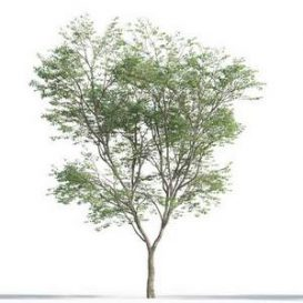 tree-3d-model-5-14-02