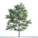 tree-3d-model-5-15-02