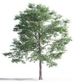 tree-3d-model-5-15-03