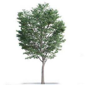 tree-3d-model-5-16-01