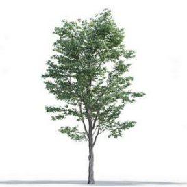 tree-3d-model-5-16-02