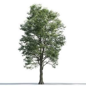 tree-3d-model-5-17-02
