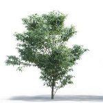 tree-3d-model-5-18-01