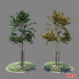 Young tree 04 3d model Download  Buy 3dbrute
