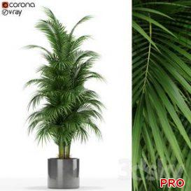 Plants collection 176 3d model Download 3dbrute