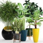 A collection of plants in pots  63