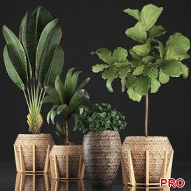 Plant collection 348 3d model Download  Buy 3dbrute