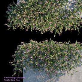 Purple Coral Pea Creeper LT 3d model Download  Buy 3dbrute