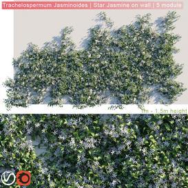 Trachelospermum Jasminoides  Star Jasmine on wall LT 3d model Download  Buy 3dbrute