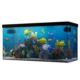aquarium 3d model Download  Buy 3dbrute