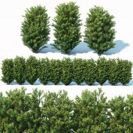 Taxus Baccata 7  70cm hedge LT 3d model Download  Buy 3dbrute