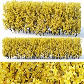Forsythia 3 hedge H120 cm LT 3d model Download  Buy 3dbrute