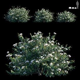 Common bush LT 3d model Download  Buy 3dbrute