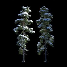 Big pine in the snow 3d model Download  Buy 3dbrute