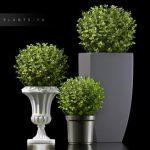 PLANTS 73 3d model Download  Buy 3dbrute