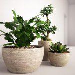 Plants50