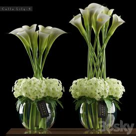 CALLA LILY 3d model Download  Buy 3dbrute