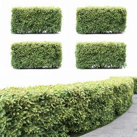 Spiraea hedgehog LT 3d model Download  Buy 3dbrute