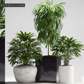 PLANTS 164 LT 3d model Download  Buy 3dbrute