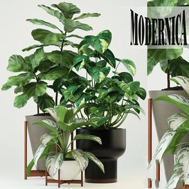Plants collection 74 Modernica pots LT 3d model Download  Buy 3dbrute