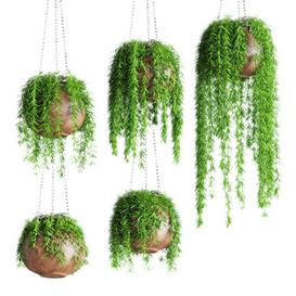 Hanging plants in pots LT 3d model Download  Buy 3dbrute