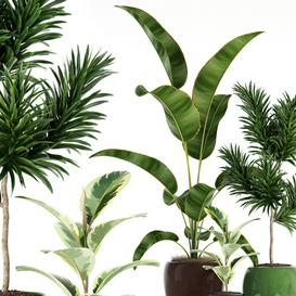 Plants collection 85 3d model Download  Buy 3dbrute