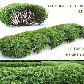 Cotoneaster shiny hedge   1 3d model Download  Buy 3dbrute