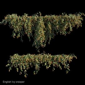 English Ivy creeper LT 3d model Download  Buy 3dbrute