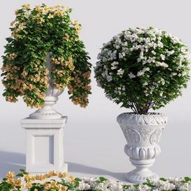 Bougainvillea planter set. 3d model Download  Buy 3dbrute
